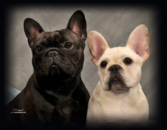 Campcovo French Bulldogs.jpg