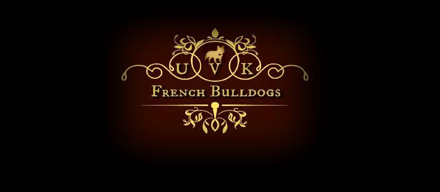akc_french_bulldogs.jpg
