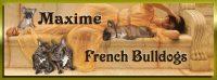 Maxime Banner narrow sm.jpg